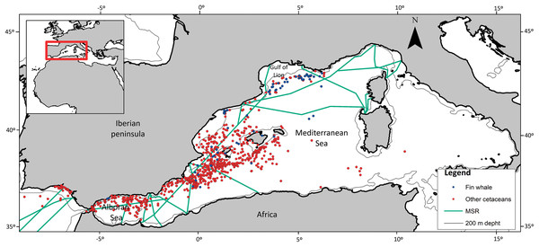 Spatial location of cetacean opportunistic sightings.
