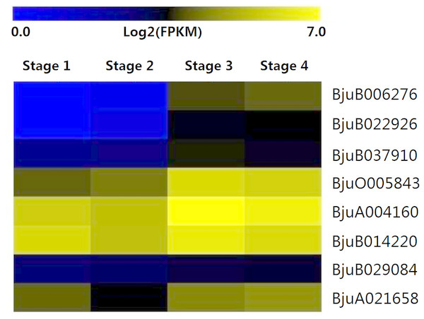 Expression levels of interaction genes of DELLA genes at different developmental stages in stem swelling.