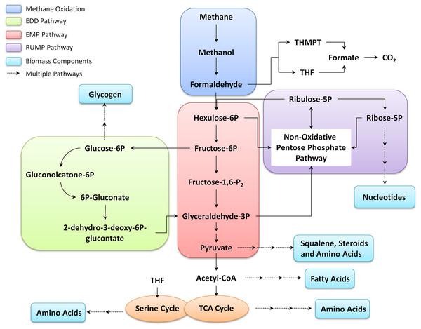 Summary of methane metabolism in Mcap.