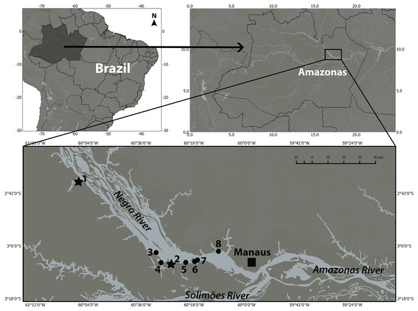 There are currently seven places where botos are provisioned in the lower Negro River.
