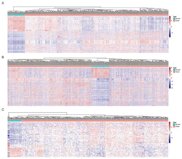 Heatmap of significantly expressed common genes between different pathology stages of LUAD.