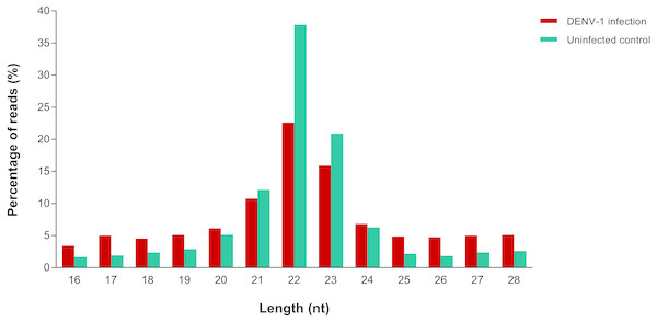 Read size distribution of clean reads from deep sequencing in DENV-1-infected and uninfected mouse livers.