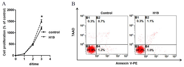 Overexpression of H19 promoted MAC-T cell proliferation but showed no effect on cell apoptosis.