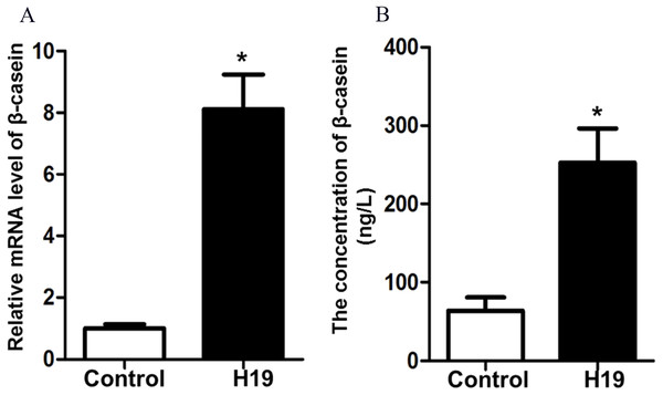 Overexpression of H19 increased β-casein gene and protein expression.
