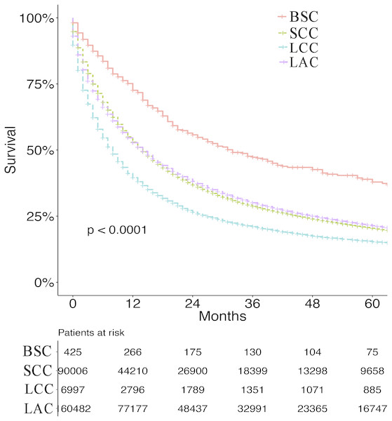 Survival for BSC, SCC, LCC and LAC.