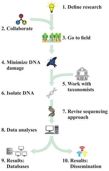 Flowchart illustrating the 10 rules proposed here to study biodiversity through insect genomics.