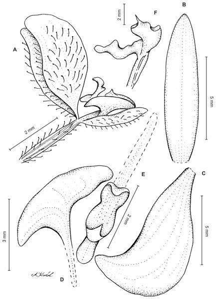 Synopsis Of The Genus Ponthieva Orchidaceae In Colombia Peerj