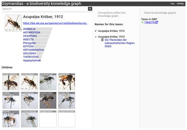Information about the genus Acupalpa Kröber, 1912 displayed in Ozymandias.