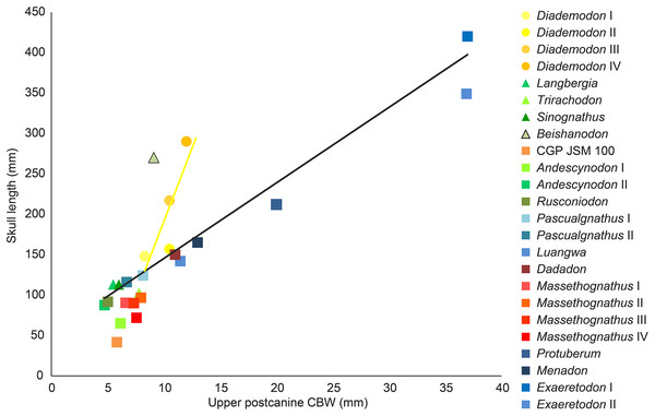 Comparison of skull length and widest upper gomphodont postcanine labiolingual width in gomphodont cynodonts, with linear regression trendlines for gomphodont taxa (in black) and Diademodon (in yellow).