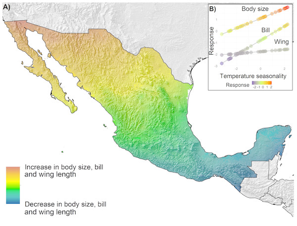 Spatial distribution of morphological variation of body size, bill size and wing length fitted for the regional level by temperature seasonality.