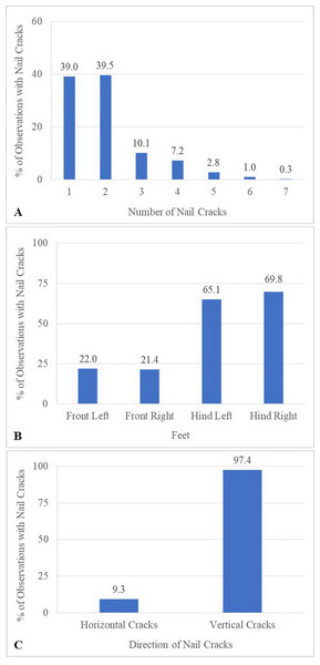 Characteristics of nail cracks of 387 observations from six times evaluation over a 15-month period.