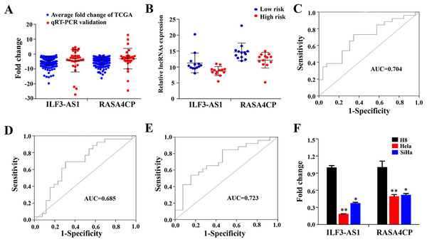 Analysis of expression of ILF3-AS1 and RASA4CP in clinical samples with qRT-PCR.