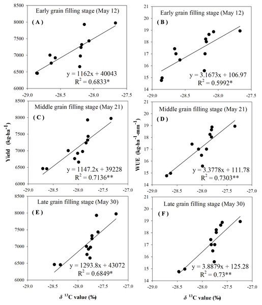 Regressions of stable carbon isotope ratio (δ13C) value in wheat flag leaves with grain yield and water use efficiency (WUE) during different grain filling stages under supplement irrigation condition in 2015–2016.