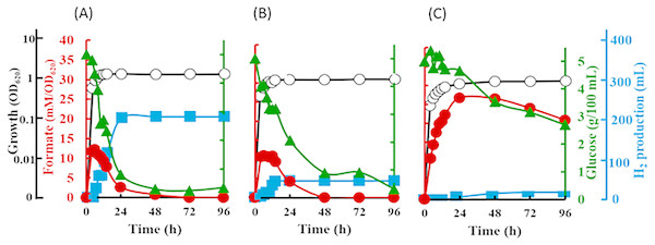 Time course of formate production, glucose consumption and hydrogen production of Escherichia coli strain JCM 1649.