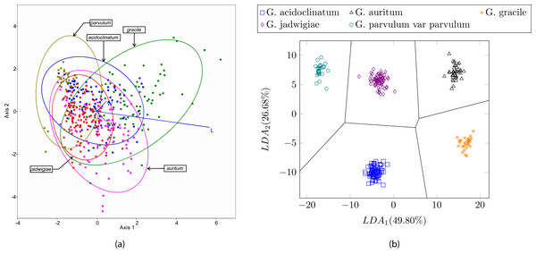 (A) Canonical variates analysis (CVA) biplot obtained in Blanco, Borrego-Ramos & Olenici (2017). Dots represents individuals and lines predictors. (B) Cluster representation for the first two components of the resulting feature vector after dimensionality reduction corresponding to the dataset presented in Table 3.