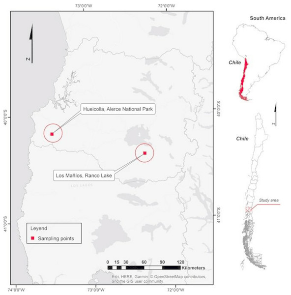 Site of possible hybrids in Los Rios regions in southern Chile.