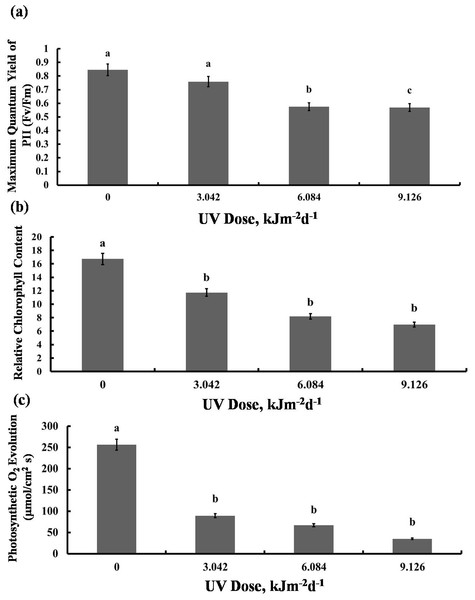Effects of three different doses of UV-B radiation (3.042, 6.084 and 9.126 kJm−2d−1) on (A) Maximum quantum yield of PSII (Fv/Fm), (B) Relative chlorop hyll content and (C) photosynthesis O2 evolution.
