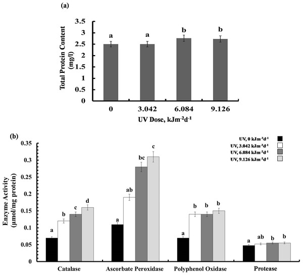 Effects of three different doses of UV-B radiation (3.042, 6.084 and 9.126 kJm−2d−1) on (A) leaf protein content, and (B) enzyme activities of catalase, ascorbate peroxidase, polyphenol oxidase and protease.