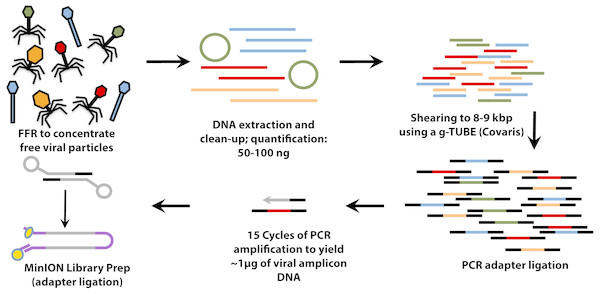 Workflow for preparation of free-viral fraction DNA for MinION sequencing.