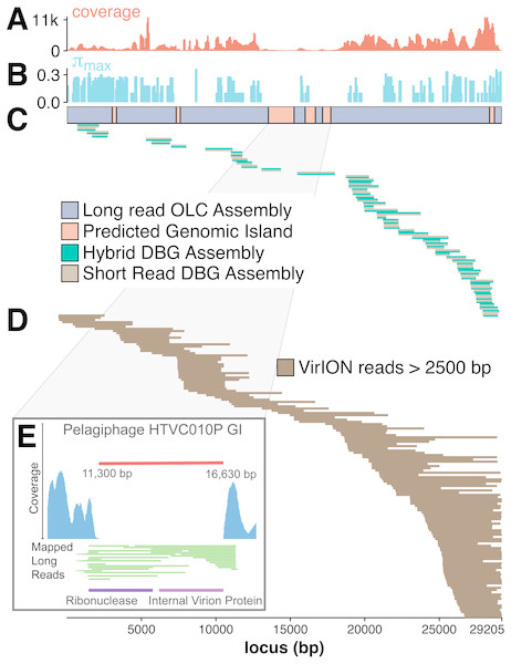 Long-read sequencing resolves microdiversity and assembly issues across genomic islands in ecologically important viral taxa.