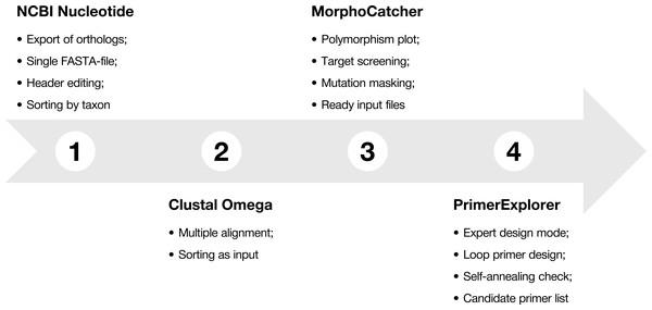 Protocol-at-a glance for successful design of taxon-specific primer sets.