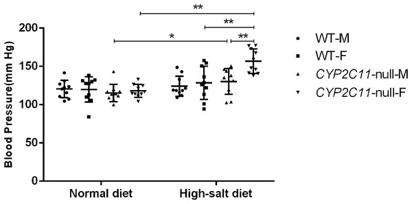 High-salt diets elevated blood pressure in CYP2C11-null rats.