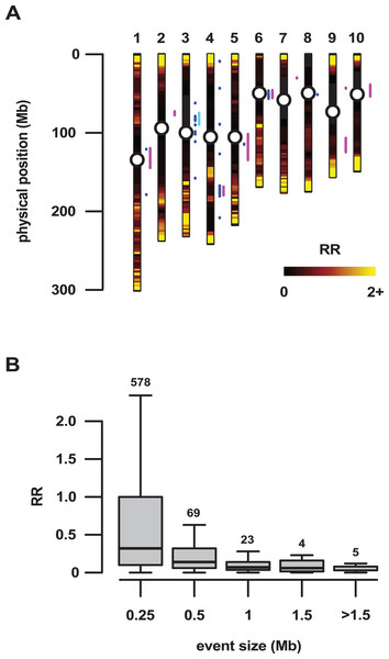 Large regions of introgression are associated with low genetic recombination.