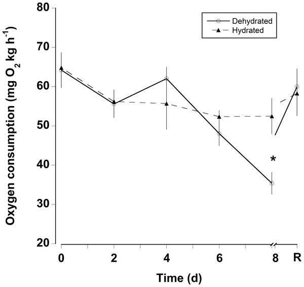 Oxygen consumption rates with dehydration.