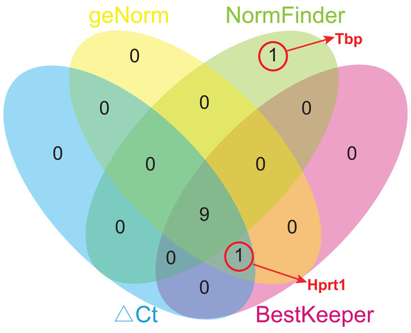 Venn diagram of top 10 stable genes obtained from geNorm, NormFinder, comparative ΔCt, and BestKeeper.