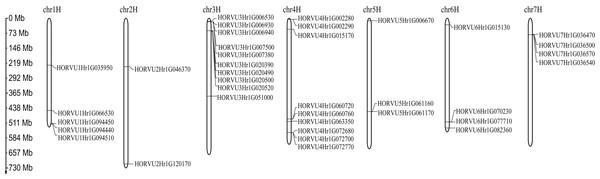 Chromosome localizations of barley HvHsp20 genes.