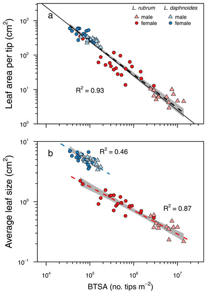 Corner's rules and the relationships between branch ramification (BTSA), leaf size, and leaf area per branch tip.