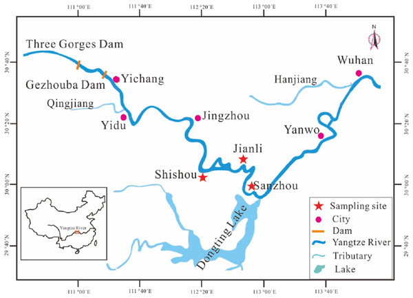 Map showing the sampling locations and other main sites in stock enhancement program in the middle reaches of Yangtze River.