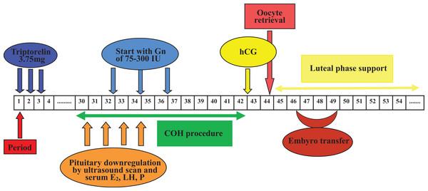 Flow chart of GnRH agonist prolonged regimen in Group 1.