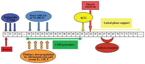 Flow chart of GnRH agonist prolonged regimen in Group 2.