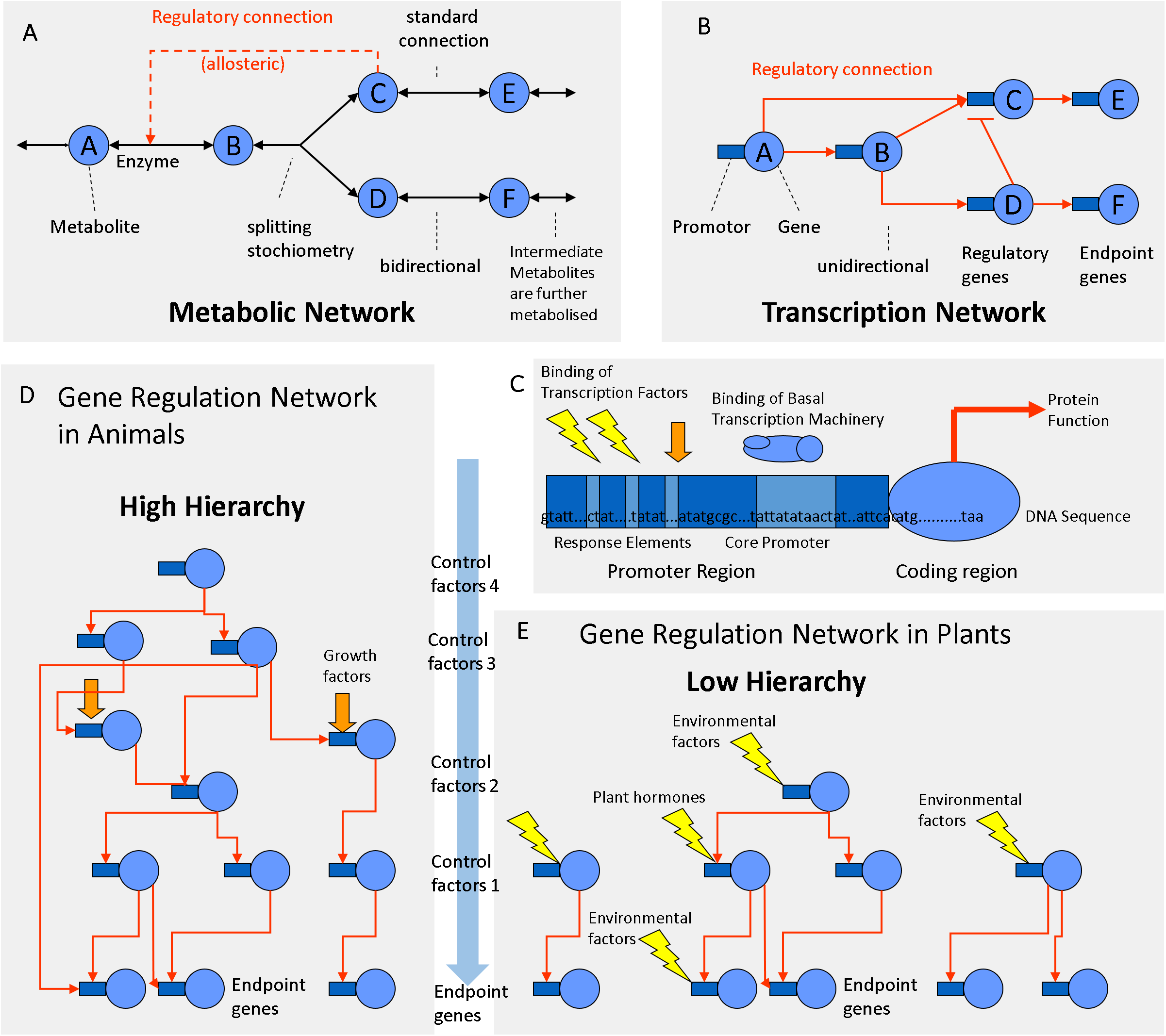Exploring regulatory networks in plants: transcription