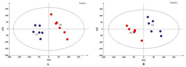 PLS-DA score plot.