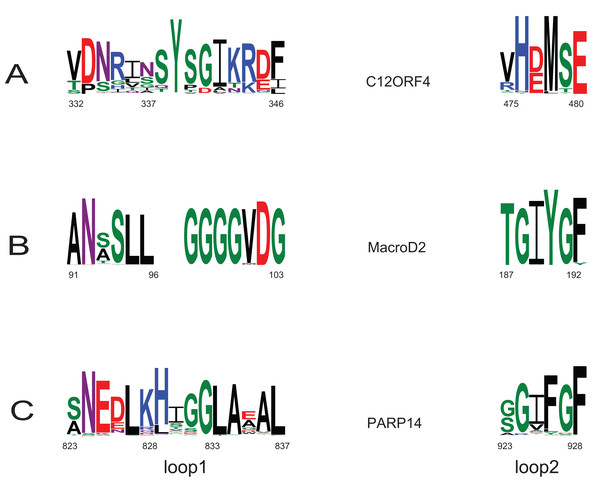 Sequence logos for active sites in loop 1 and loop 2 in two Macro families: MacroD2 and PARP14 compared to DUF2362.