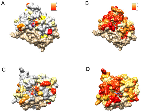 Similarity of DUF2362 to known Macros and sequence variation within the family mapped on three-dimensional structures.