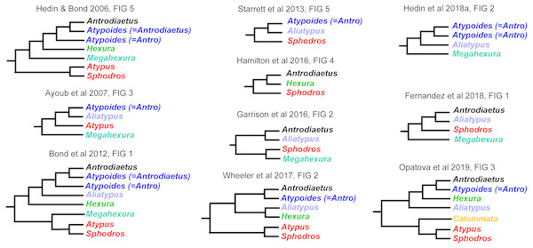 Summary of previous molecular phylogenetic analyses including members of Atypoidea.
