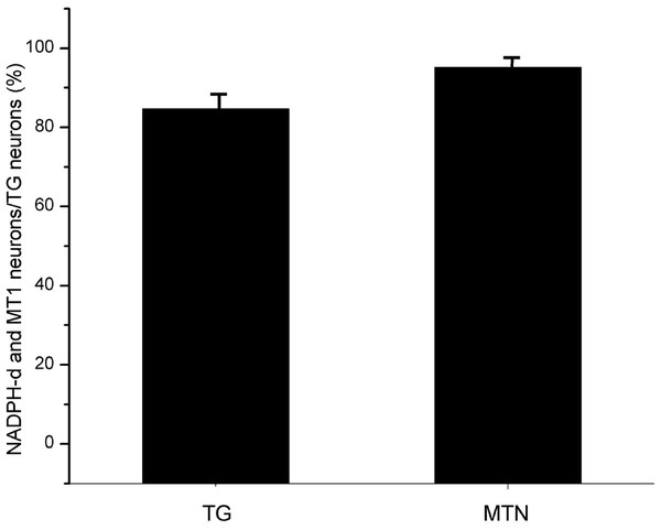The proportion of coexisting neurons MT1 and NADPH-d in TG and MTN.