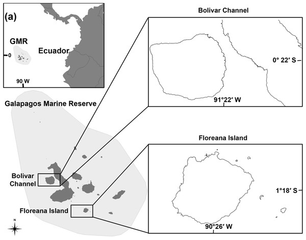 Map of the Galápagos Marine Reserve (GMR) indicating ecosystem model locations at the Bolivar Channel and Floreana Island.