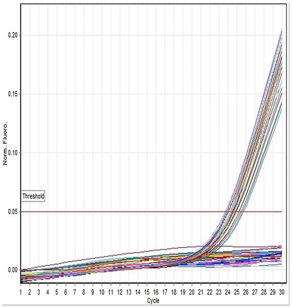 Linear amplification curves of DM-W gene for all specimens using the TaqMan-based assay.