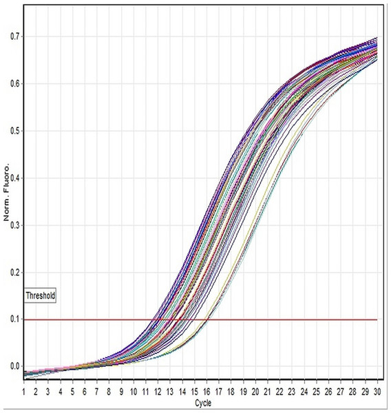 Linear amplification curves of 18S rRNA gene for all specimens using the TaqMan-based assay.