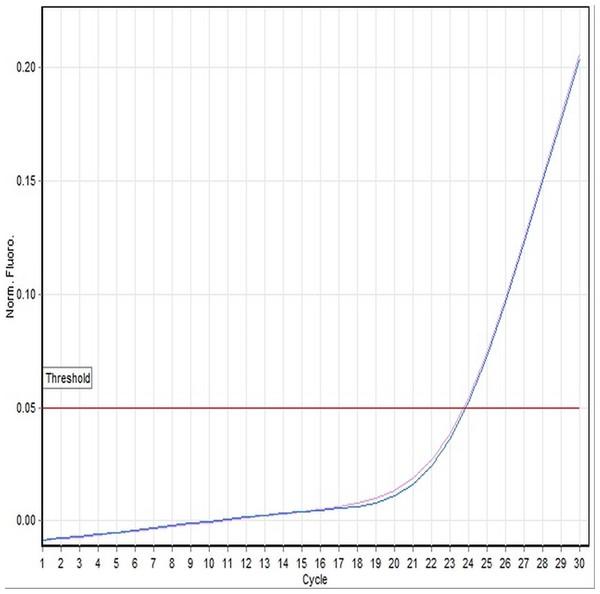 A representative example of linear amplification curve of a female specimen (100A-116-DNA-35) using the TaqMan-based assay.
