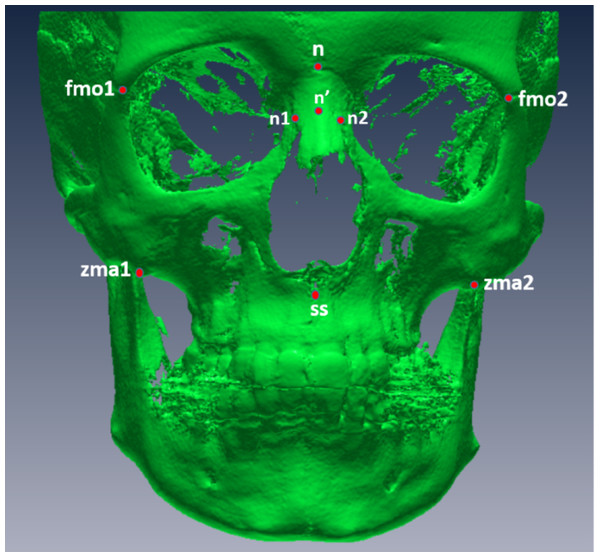 Digitized points from a frontal view.