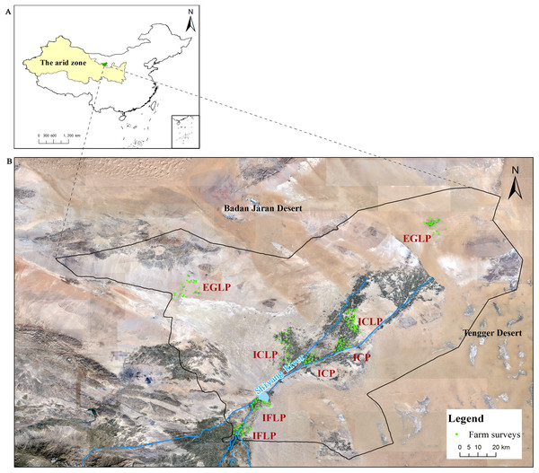 Satellite map of study site at Minqin Oasis, China.