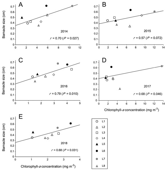 Relationships between coastal phytoplankton abundance (chlorophyll-a concentration) and intertidal barnacle size in (A) 2014, (B) 2015, (C) 2016, (D) 2017, and (E) 2018.