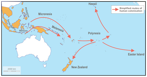 Schematic map showing simplified routes of human-aided dispersal of Polynesian rats, Rattus exulans.
