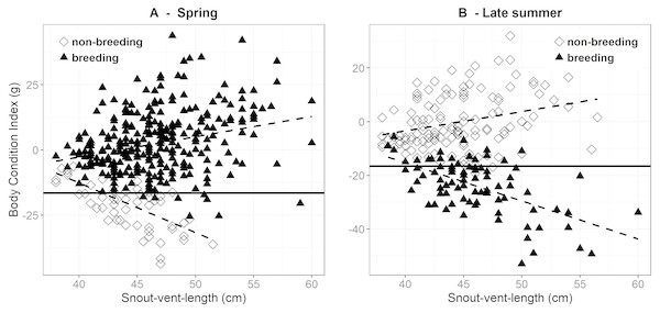 Body condition versus snout-vent length in breeding and non-breeding females during.