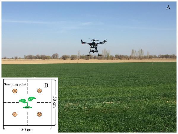Application scene of UAV over the cropland and sampling cells.